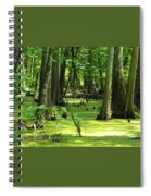 Cypress Knees In Wetlands Spiral Notebook
