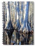 Cypress Reflection Spiral Notebook