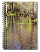 Cypress Trees Along The Hillsborough River Spiral Notebook