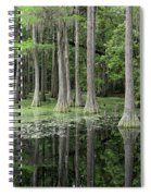 Cypresses In Tallahassee Spiral Notebook