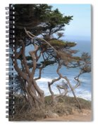 Cypress On The Cliff 15 Spiral Notebook