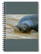 Da Benny Sleeps Spiral Notebook