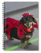 Dachshund Lobster Spiral Notebook