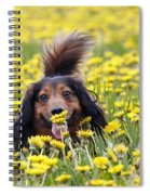 Dachshund On A Meadow In Bloom Spiral Notebook