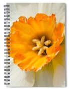 Daffodil Narcissus Flower Spiral Notebook
