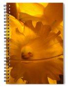 Daffodiil Flowers Evening Glow 9 Contemporary Modern Art Print Giclee Spiral Notebook