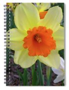 Daffodil 0796 Spiral Notebook