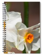 Daffodil Dazzle Spiral Notebook