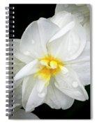 Daffodil Diagonal Spiral Notebook