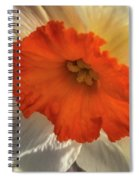 Daffodil Down Spiral Notebook