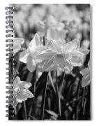 Daffodil Glow Monochrome By Kaye Menner Spiral Notebook