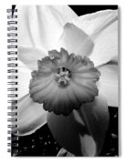 Daffodil In Springtime Spiral Notebook