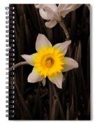 Daffodil Spiral Notebook