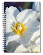 Daffodil Up Close Spiral Notebook