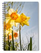 Daffodils Backlit Spiral Notebook