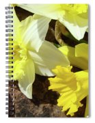 Daffodils Flower Bouquet Rustic Rock Art Daffodil Flowers Artwork Spring Floral Art Spiral Notebook