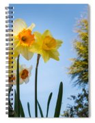 Daffodils In The Sky Spiral Notebook