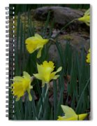 Daffodils In The Smokies Spiral Notebook