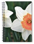 Daffodils Orange And White Spiral Notebook