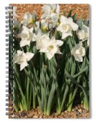 Dafodil001 Spiral Notebook