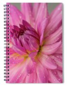 Dahlia After The Rain Spiral Notebook