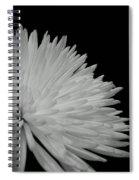 dahlia BnW Spiral Notebook