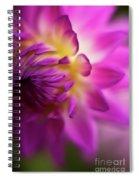 Dahlia Brilliance Spiral Notebook