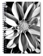 Dahlia Close Up - B And W Spiral Notebook