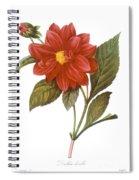 Dahlia (dahlia Pinnata) Spiral Notebook