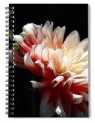 Dahlia Dreaming Spiral Notebook