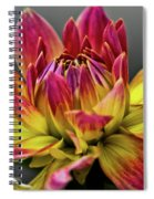Dahlia Flame Spiral Notebook
