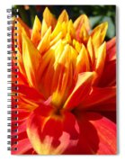 Dahlia Florals Orange Dahlia Flower Art Prints Canvas Spiral Notebook