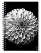 Dahlia  Flower Black And White Square Spiral Notebook