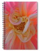 Dahlia Flower Sunlit Pink White Dahlia Garden Floral  Spiral Notebook