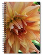 Dahlia In Bloom Spiral Notebook