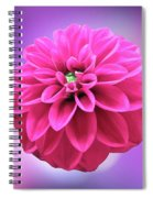 Dahlia On Color Spiral Notebook