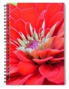 Dahlia Petals Spiral Notebook