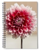 Dahlia- Pink And White Spiral Notebook