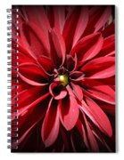 Dahlia Radiant In Red Spiral Notebook