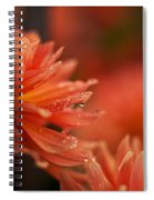 Dahlia Rainshower Spiral Notebook