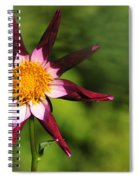 Dahlia Red White And Green Spiral Notebook
