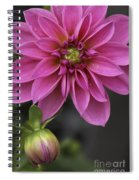 Dahlia With Dew In Pink Spiral Notebook