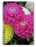 Dahlias Multi Spiral Notebook
