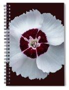 Dainty Dame Spiral Notebook