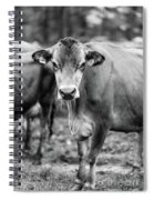 Dairy Cow On A Farm Stowe Vermont Black And White Spiral Notebook