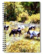 Dairy Cows In A Summer Pasture Spiral Notebook