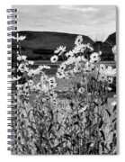 Daisies By The Roadside At Loch Linnhe B W Spiral Notebook