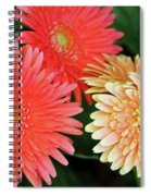 Daisies Close Up Spiral Notebook