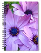 Daisies Lavender Purple Daisy Flowers Baslee Troutman Spiral Notebook