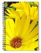 Daisies Summer Garden Art Print Yellow Daisy Baslee Spiral Notebook